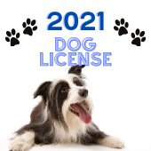Dog License picture