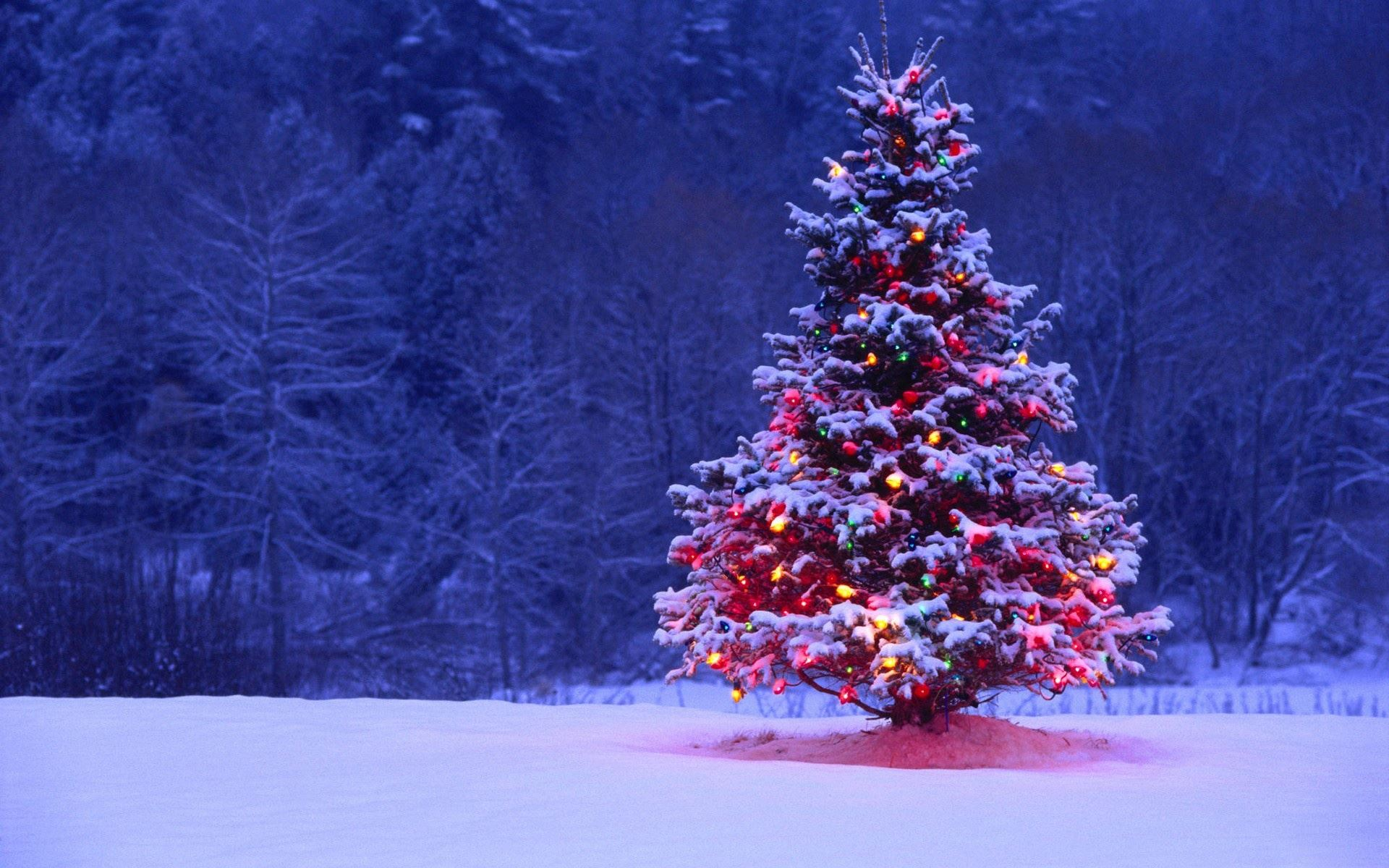 snowy-outdoor-decorated-christmas-tree